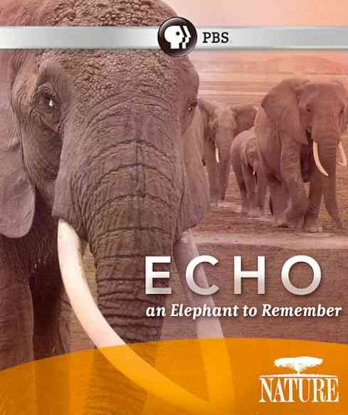 NATURE:ECHO ELEPHANT TO REMEMBER (Blu-Ray)